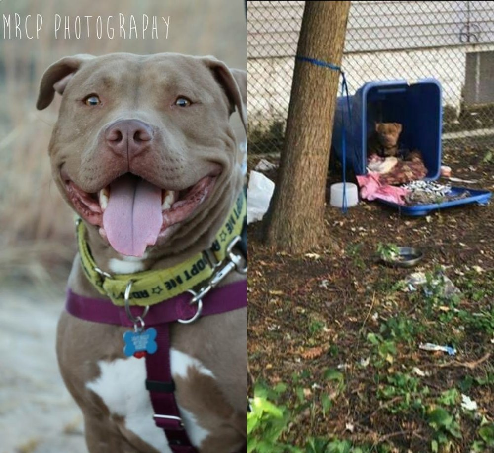 Buddha was found tied to a tree and living in a recycling bin. He ended up at the city shelter and became a safe humane chicago dog. thanks to his fosters, He now enjoys A plush life in his forever home -