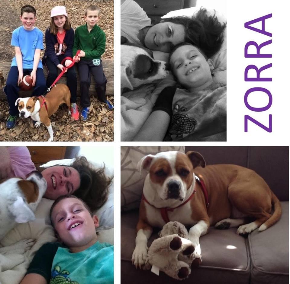 Zorra (fka Pearl), Adopted 2014. RIP December, 2016