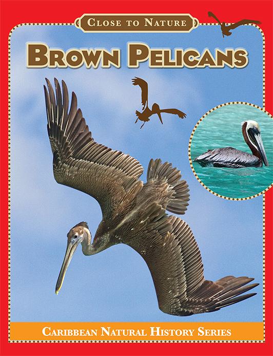 Brown-Pelicans-Cover-72.jpg