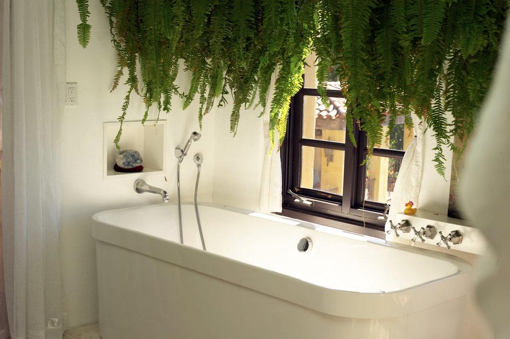 bathtubferns.jpg