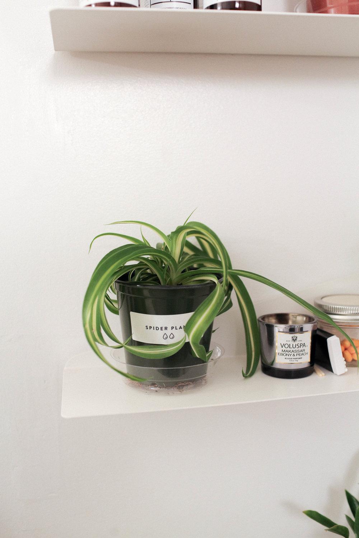 PlantSurvivor-8.jpg