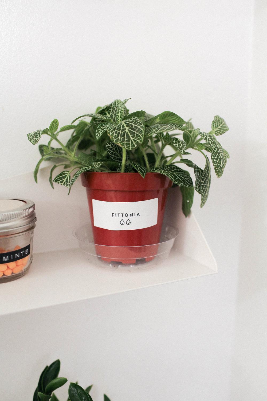 PlantSurvivor-9.jpg
