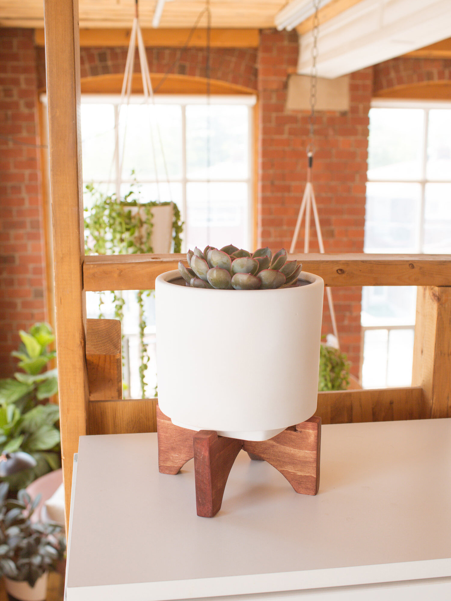 That Cost How Much?! - Plant Stand Edition — The Sorry Girls