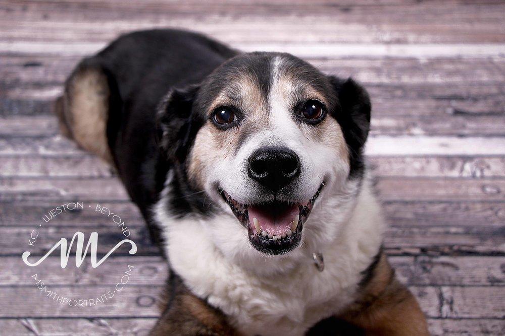 Rescue Dog Photo