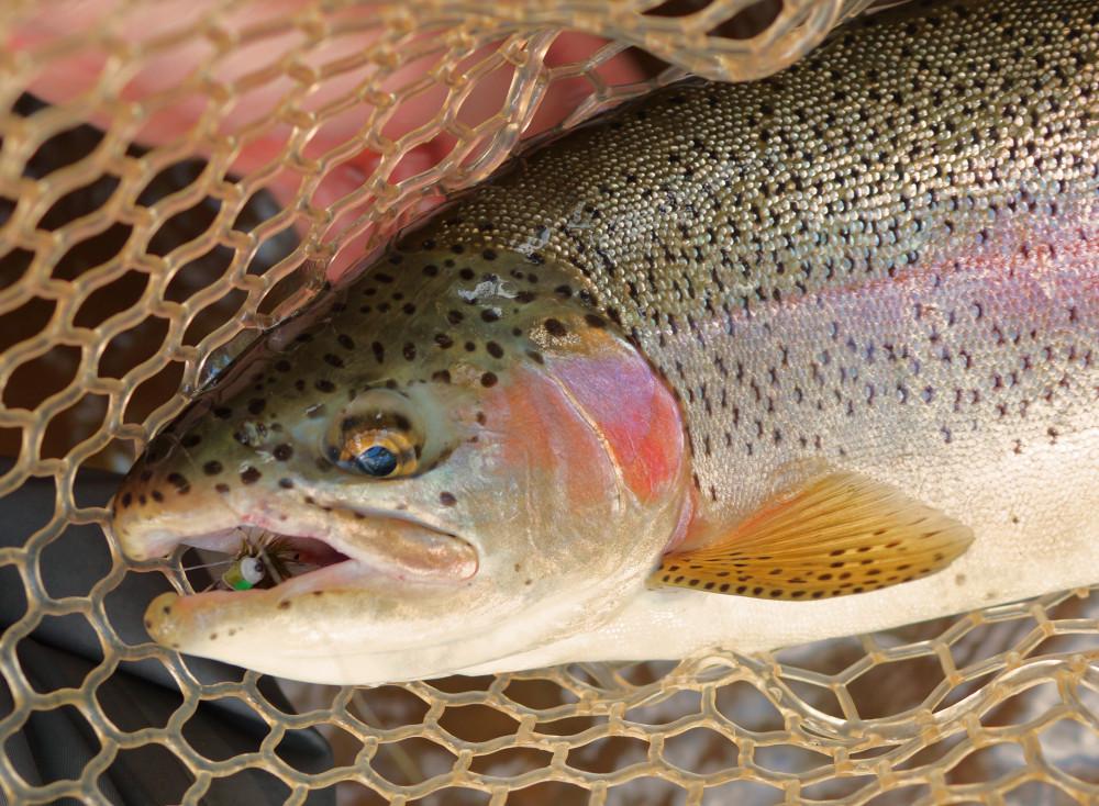 Dukes_Creek_Snackin_on_Poppers-e1374419616828.jpg