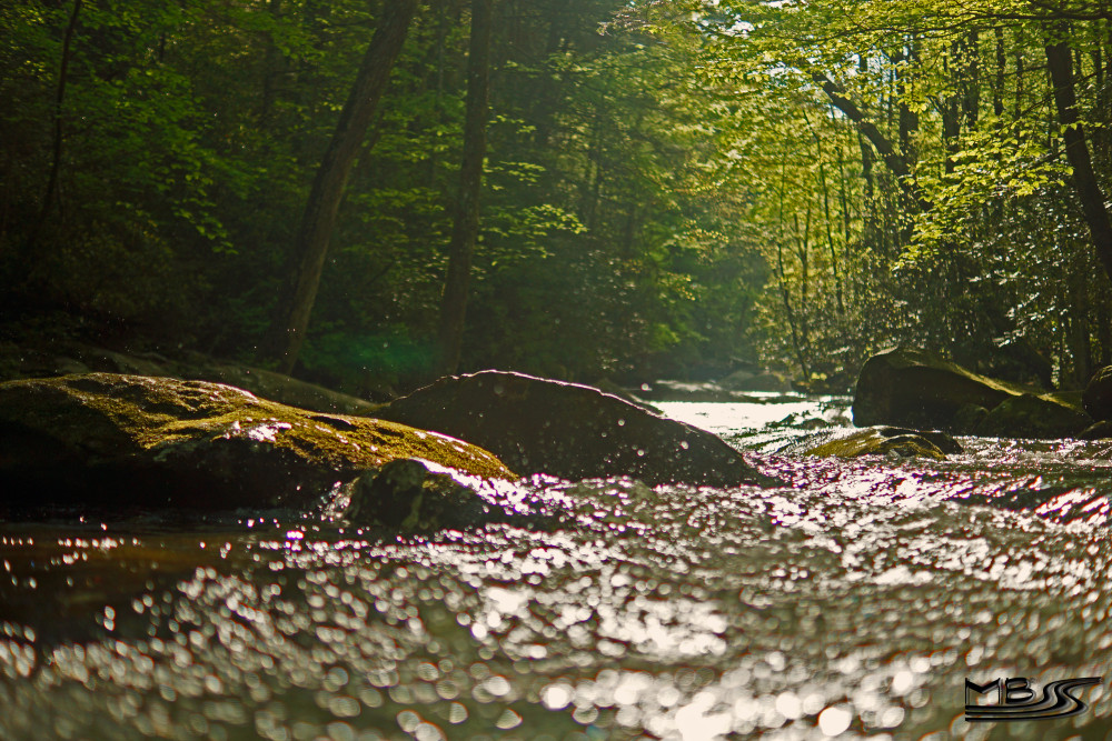 Conasauga_5_1_2013_247_good_copy-e1368148447638.jpg