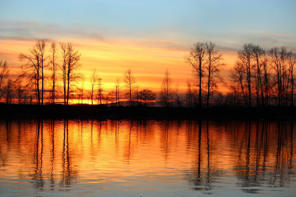 Photography: 'Fraser in Amber' by Janet Kvammen