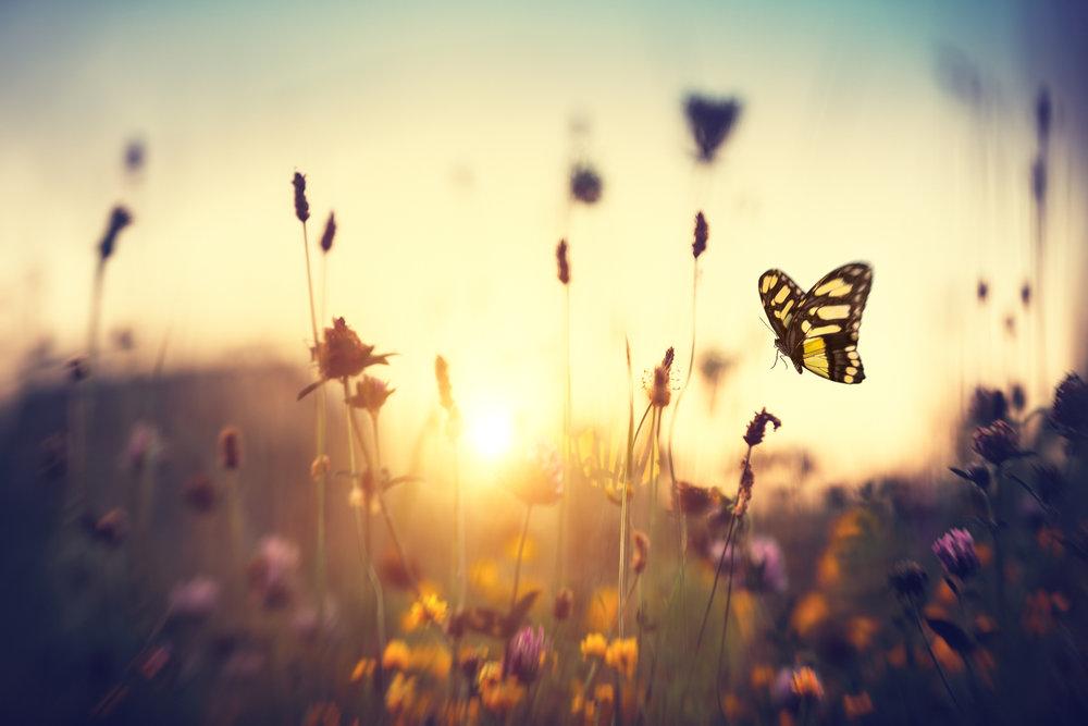 htv.web.butterfly.jpg