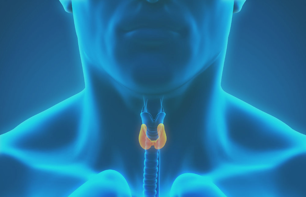 thyroid -