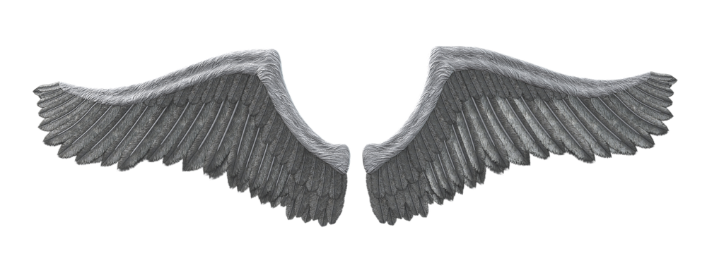 wing-3235472_1280.png