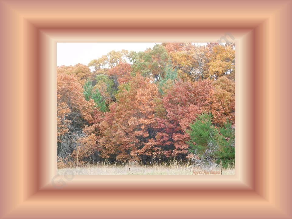 This photo was taken october 2017. The colors that were in the photo I put in the frame. The amazing peach like colors were beautiful in these trees!