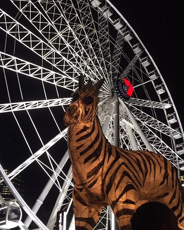 Carrying our Zebra at MDA's Luminous Lantern Festival! More photos to come!