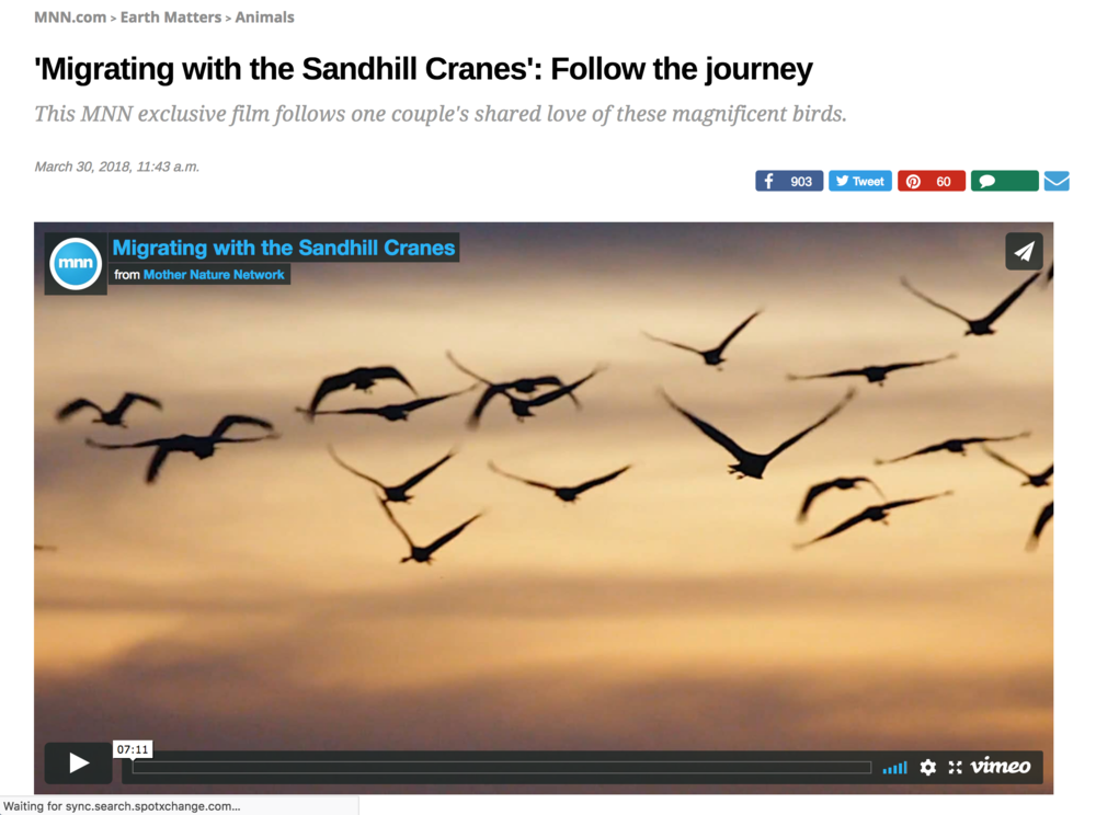 "Screen shot of the opening to ""Migrating with the Sandhill Cranes"" featuring the amazing work of Erv Nichols and Sandra Noll.  To view click on  https://www.mnn.com/earth-matters/animals/blogs/migrating-sandhill-cranes-mnn-film-exclusive-bryan-nelson ..."