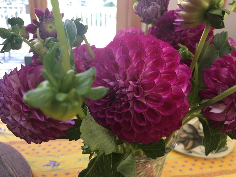Birthday dahlias - gorgeous.
