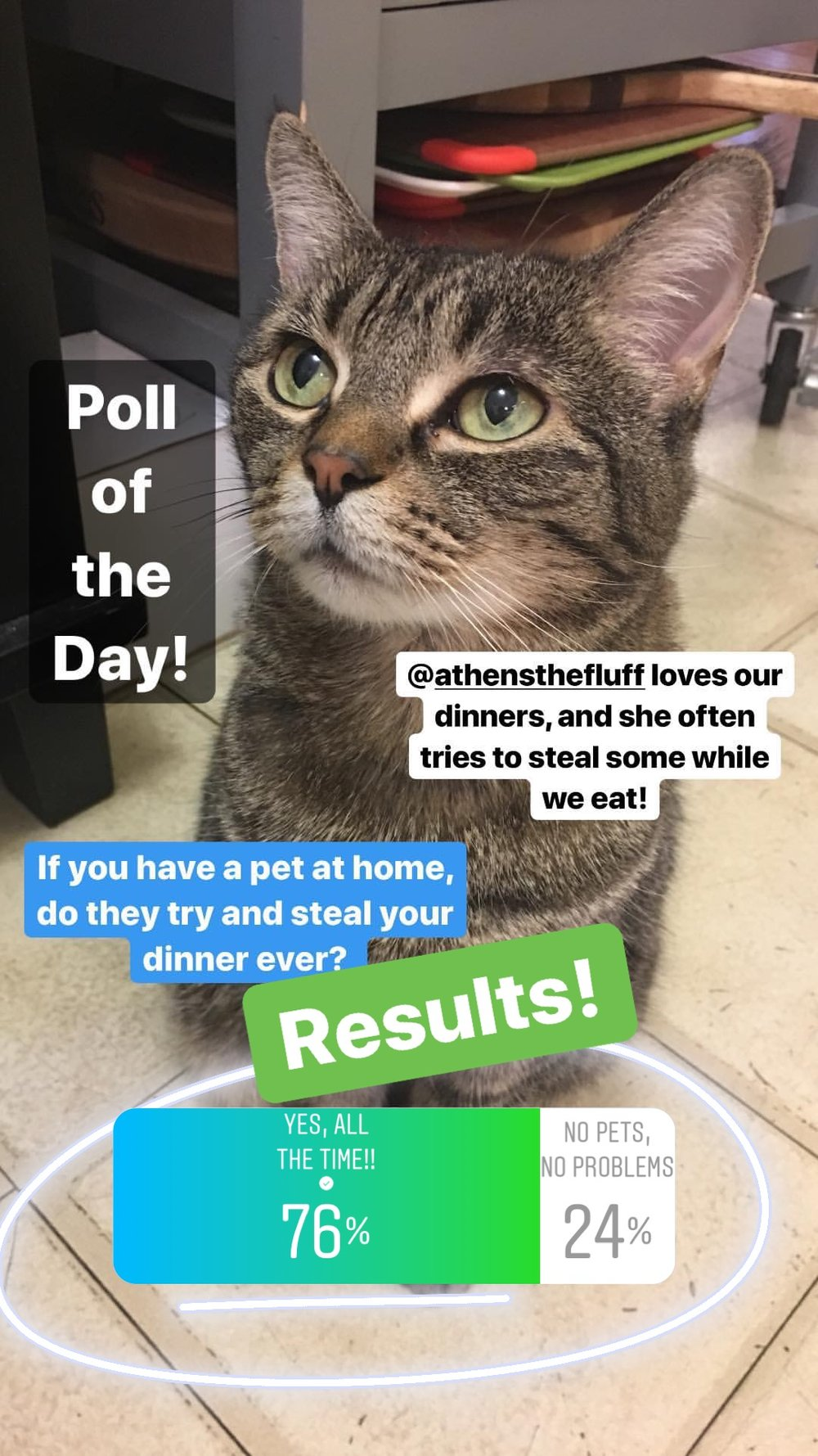 The results of this poll made me very happy! Glad to know that other homes with pets have this exact same problem as our cat always tries to steal some of our dinner! While she's extremely partial to tomato sauce, she undeniably tries to taste every dinner, making sure to leave it alone if she has no interest (which is rare). So, fellow pet owners, rejoice! Maybe we should have one big dinner party for the pets, with people food? It would be quite the sight! :)