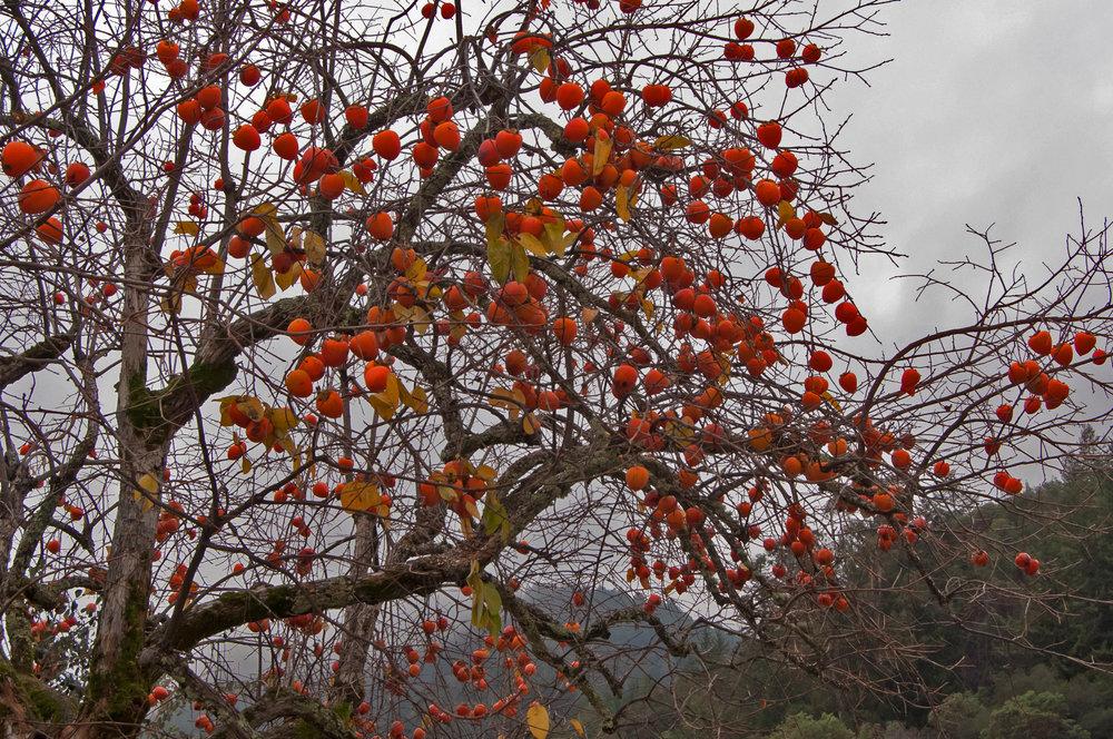 November at the Villa