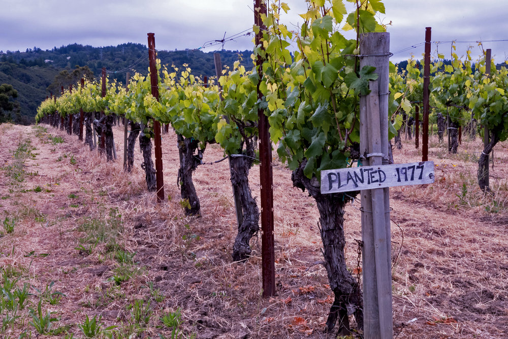 Reserve vines planted in 1977