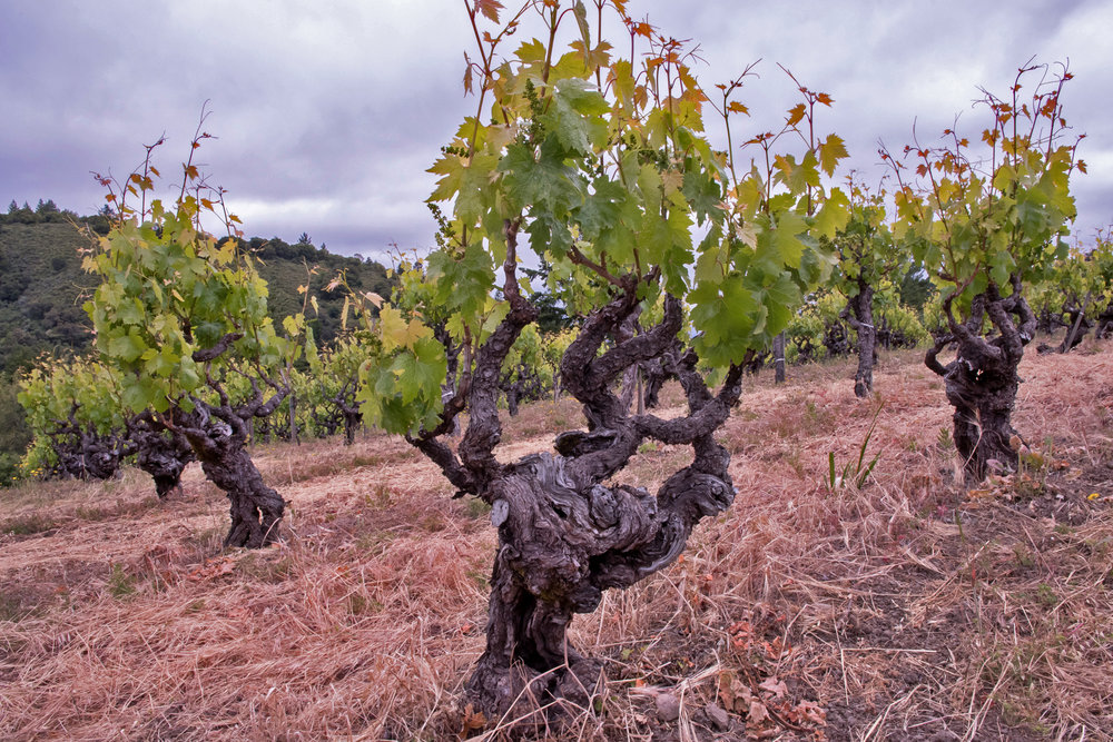 Vines planted in 1977.