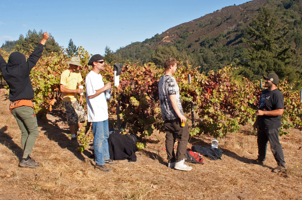 Sav Chan vineyard surroundings