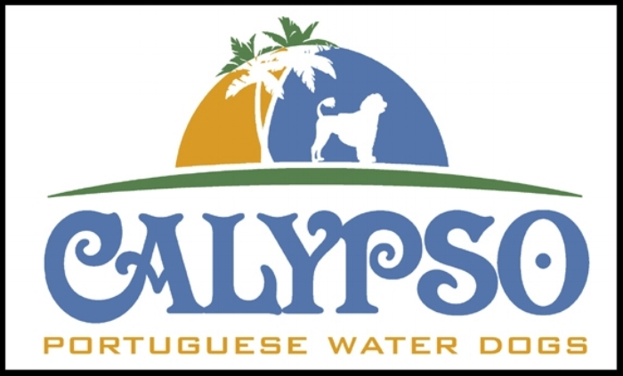 Calypso Water Dogs