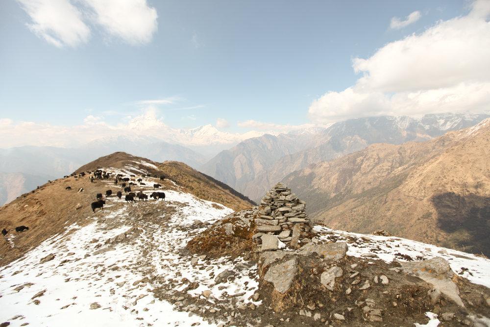 khopra-ridge-yak-herder_BEFORE.jpg