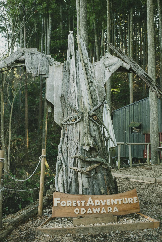Forest adventure_0123.JPG