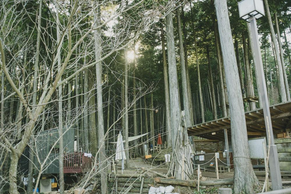 Forest adventure_0124.JPG
