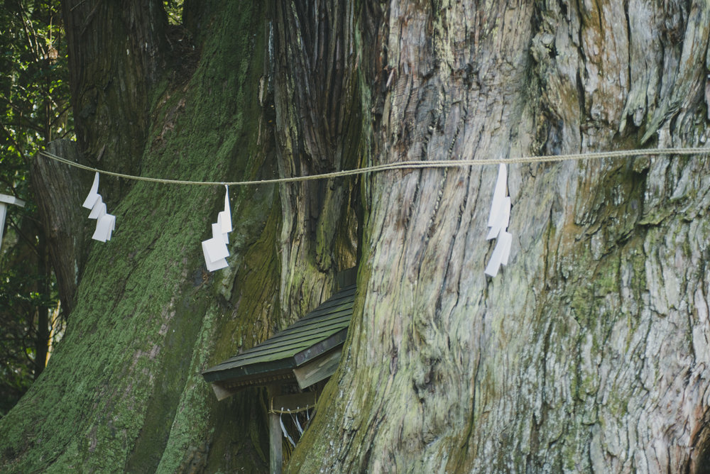 Hagi Hiyoshi Shrine | Saitama  A Shrine deep in the forests of Nishidaira