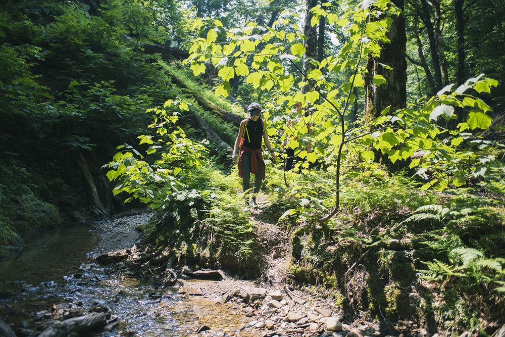 kyoto_japanese_trekking_tour_ashiunomori_141.jpg