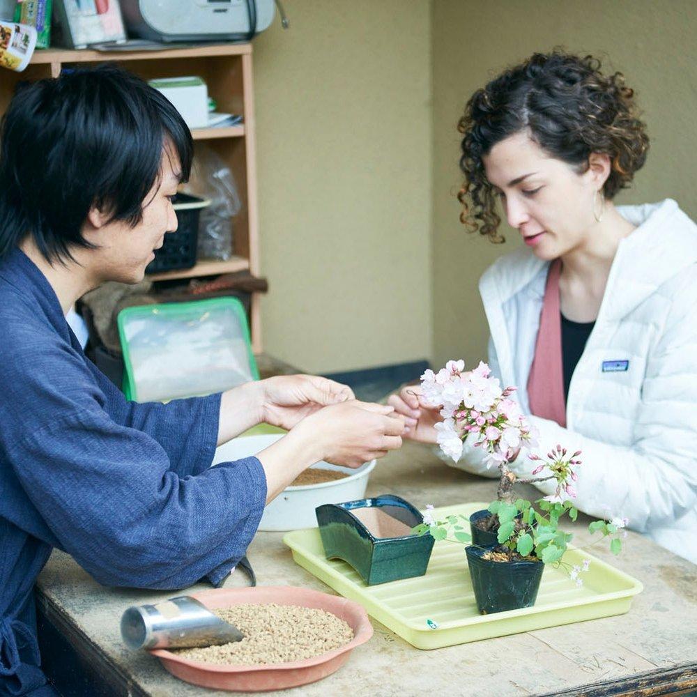 saitama_bonsai_saika_033.jpg