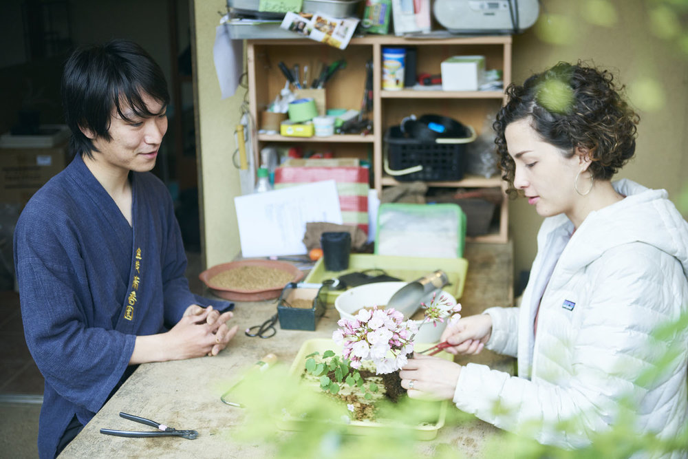 tokyo_bonsai_cherry_blossom_sakura_083.jpg
