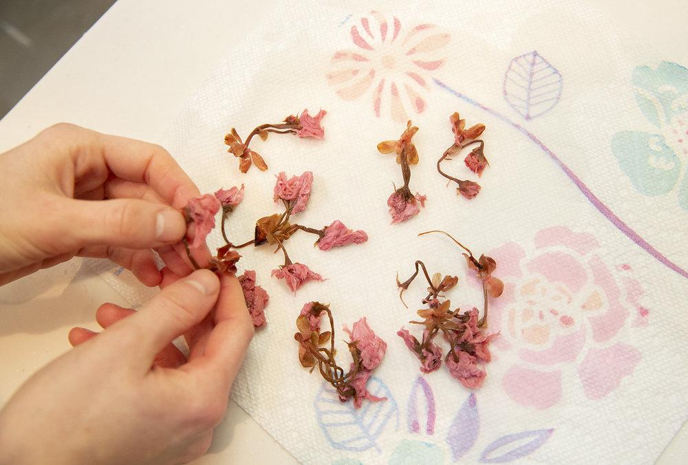 detouur_tokyo_shojinryori_cherry_blossoms_sakura_tofu_2.jpg