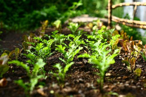 Farm_In_Atitlan_newr_Bamboo_House.jpg