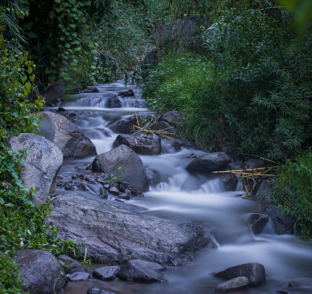 Flowing Stream as relates to genito-urinary tract, Permaculture for the Herbalist's Path, an integrated Permaculture Design Certification and Herbal Studies course, with the Bambu Guest House, Atitlan Organics, and Punta Mona, September 23-October 18, 2019 at Lake Atitlan, Guatemala
