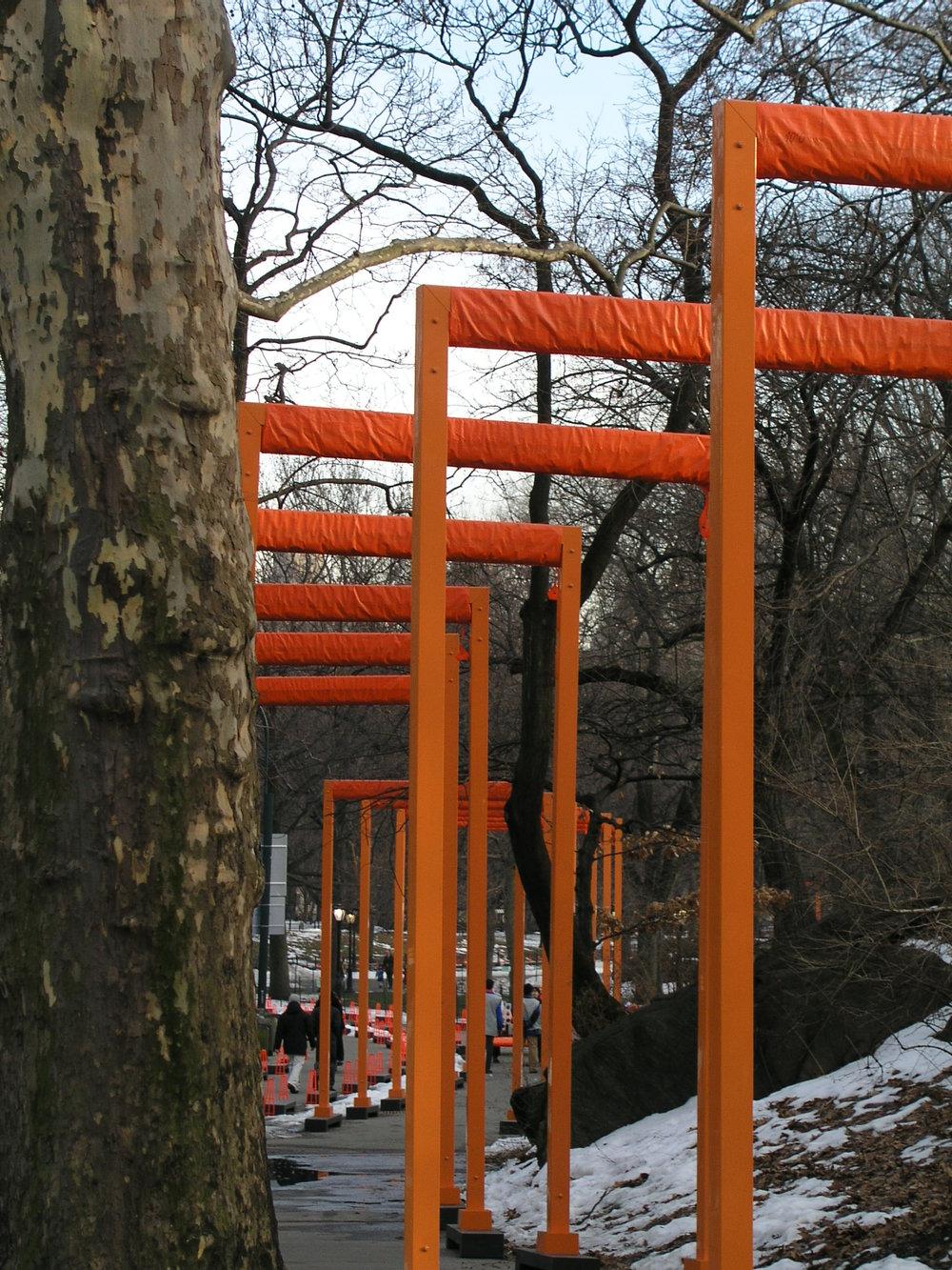 Gates Trees2.JPG