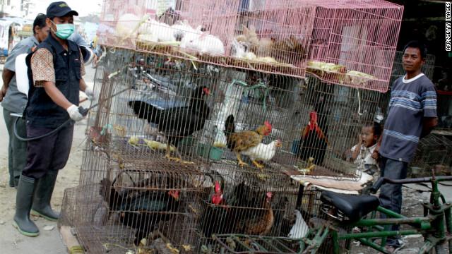 120131111830-bird-flu-indonesia-story-top.jpg
