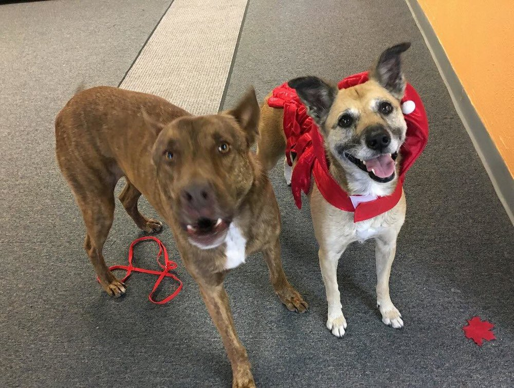 I have boarded with them and couldn't be happier with their service. My dogs were healthy, clean and happy when I came to pick them up. When you leave your fur babies with them, rest assured they will be well looked after - ~Gemise C. Bailey & Guinness' Mom