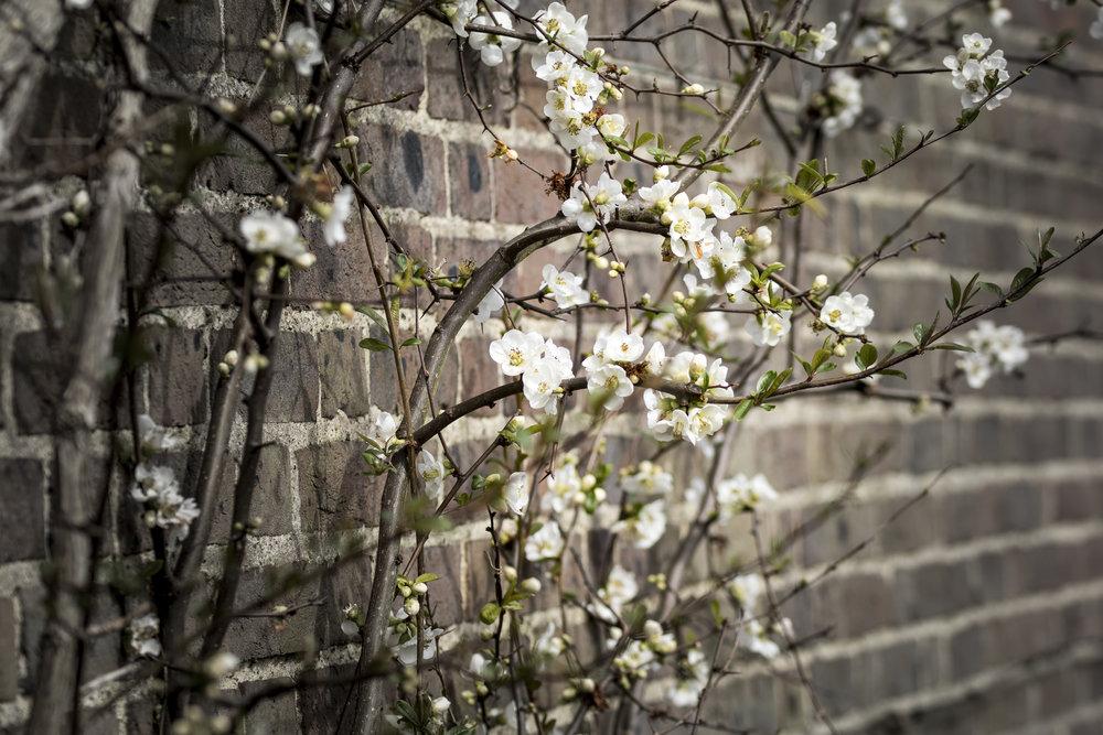 10-April-2016 Kew111.jpg