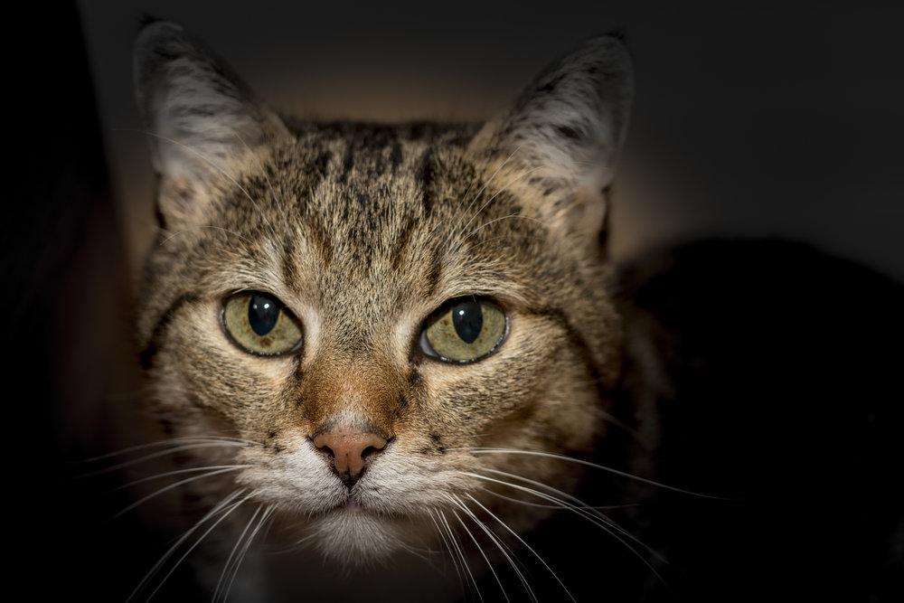 30-April-2016 Cats3.jpg