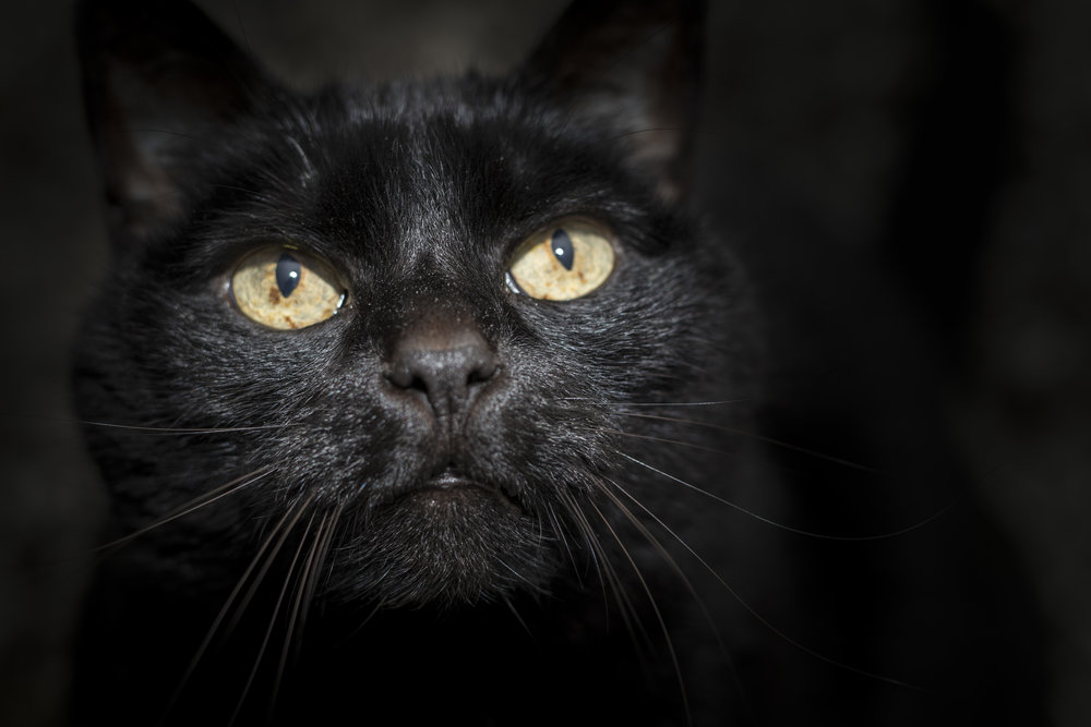 30-April-2016 Cats6.jpg