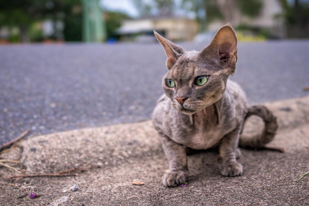 ~ Neighbourhood Cats ~ -
