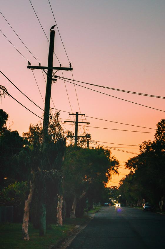 Mr Magpie stalks me on my homebound walk just before dark.