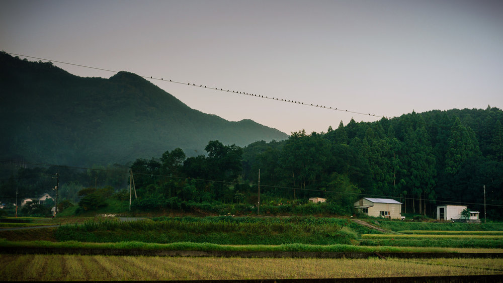 Sparrows on a wire: view from my campsite at dawn near Enko-ji, temple #39 & the final Kochi temple. I really like this part of the Henro.