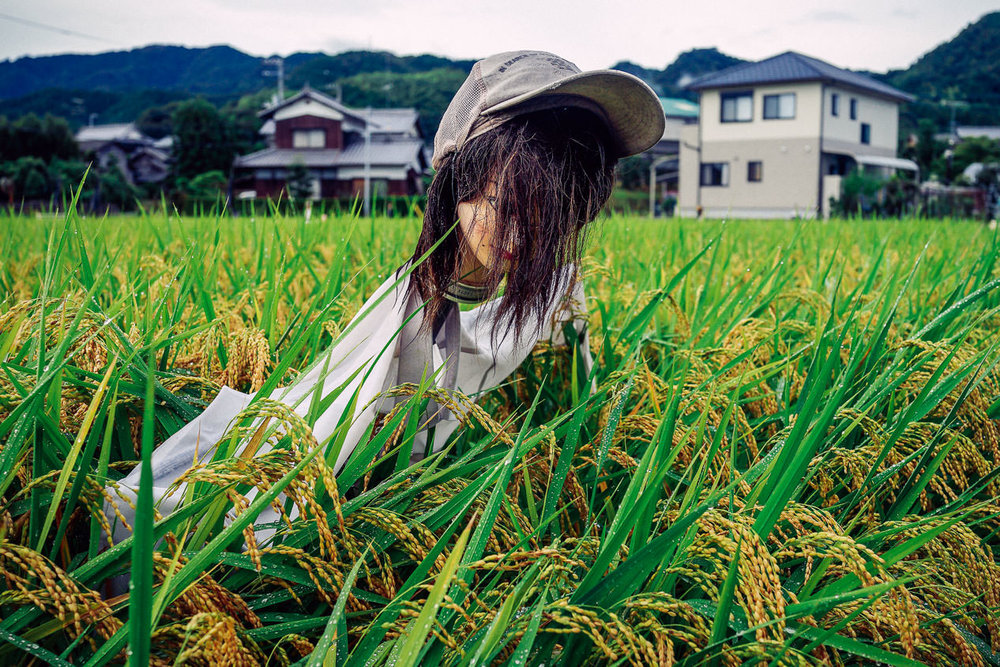 Shikoku is scarecrow country. I don't know why, but they're very common there. This was near Senyu-ji, temple #58, Ehime.