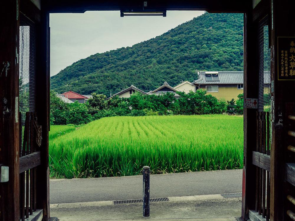 "A verdant rice paddy beyond the temple gates, Mandara-ji, temple #72, Kagawa. Mandara is just the Japanese pronunciation of ""mandala""."