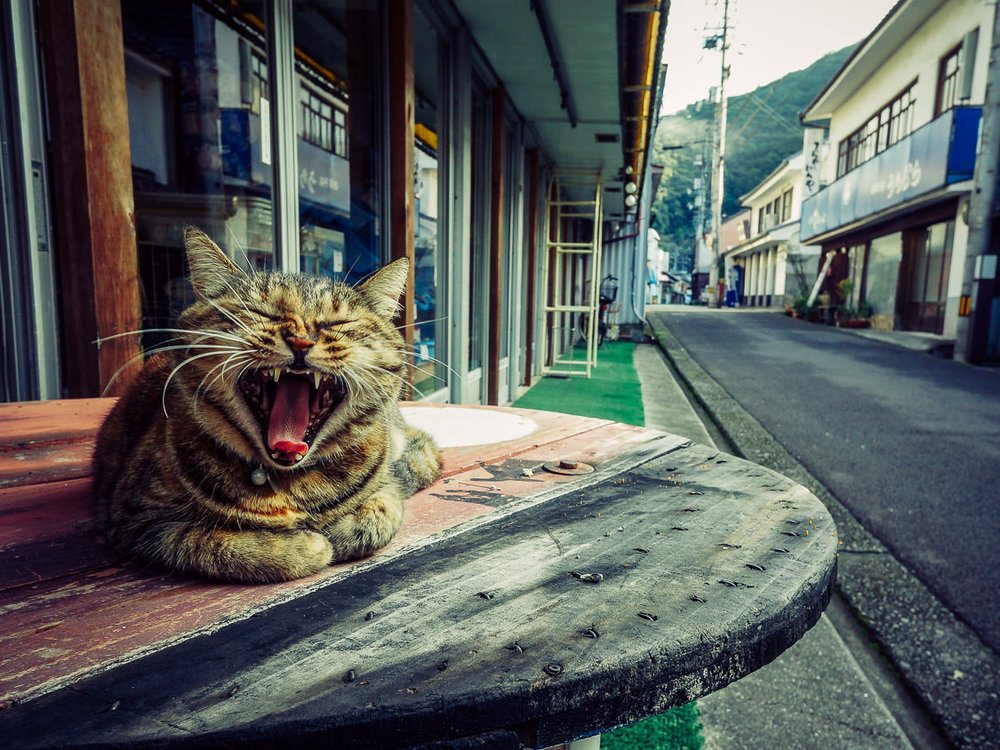 First to rise in sleepy Iwamatsu, Ehime. One of the rare cats I encountered on the Henro that was friendly & approachable. I looked for him/her this year but no luck.