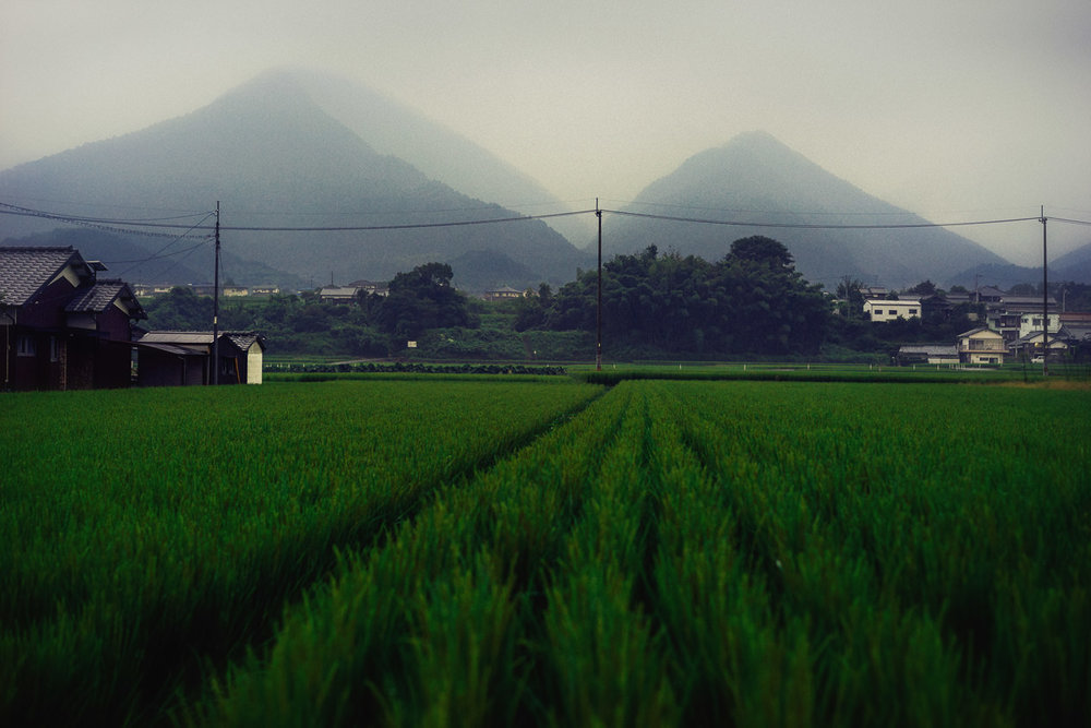A rainy dawn on the 45km road-walk between temples #64 & #65, Ehime.