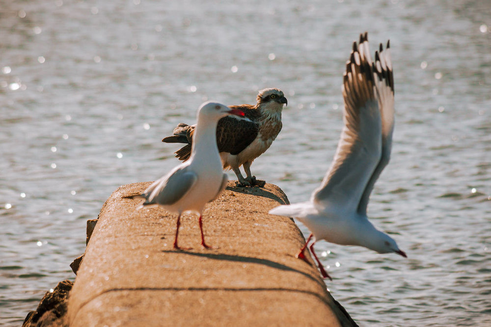 My first foray onto the groyne - damn those pesky seagulls!
