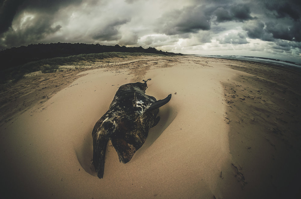 A dead dolphin on the eastern shore I encountered by headlamp light on a trek in search of a campsite.