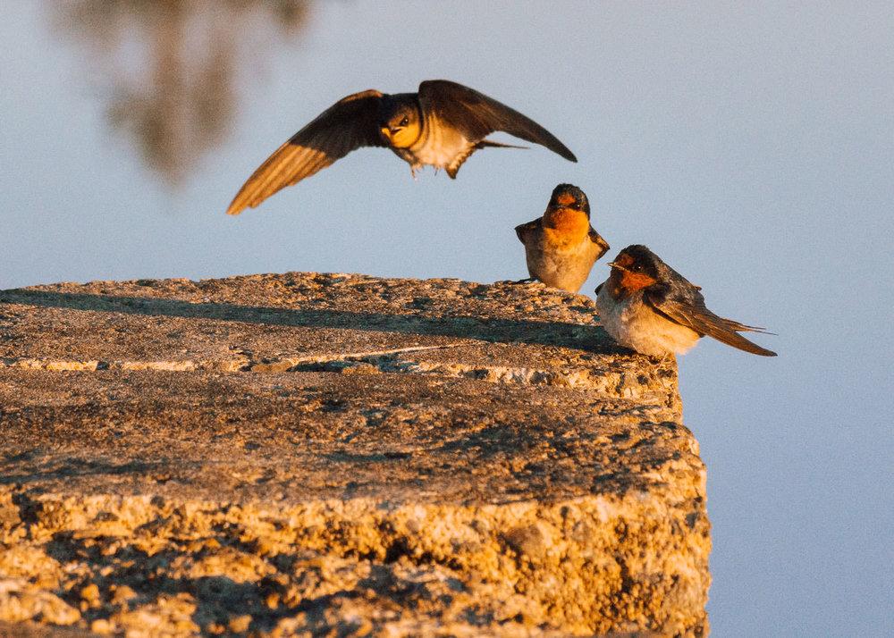 waterfront-swallows-sandgate-dawn-1.jpg